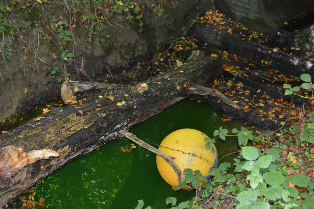 Green Balcombe Stream